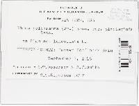 Mycosphaerella polygramma image
