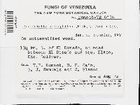 Flaviporus hydrophilus image