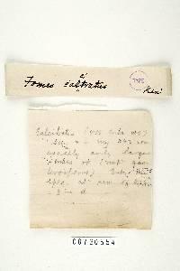 Polyporus calcitratus image