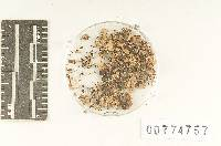 Agaricus earlei image