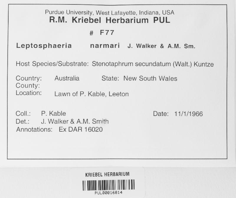 Leptosphaeria narmari image