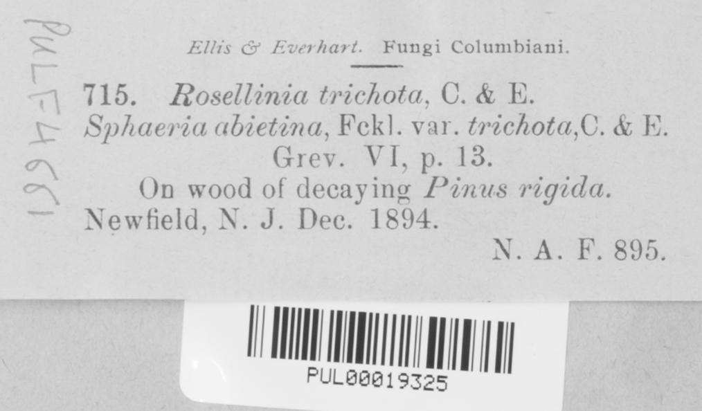 Rosellinia trichota image