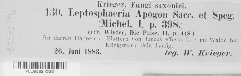 Leptosphaeria apogon image