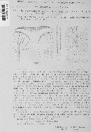Hypomyces lateritius image
