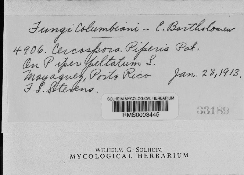 Pseudocercospora piperis image