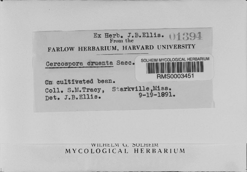 Mycosphaerella cruenta image