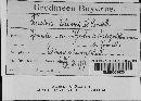 Image of Puccinia echinopis