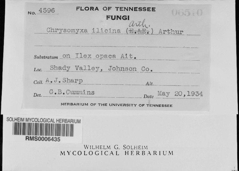 Chrysomyxa ilicina image