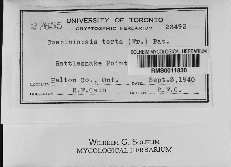 Guepiniopsis tortus image