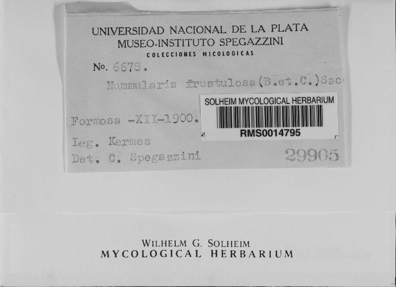 Nummularia frustulosa image