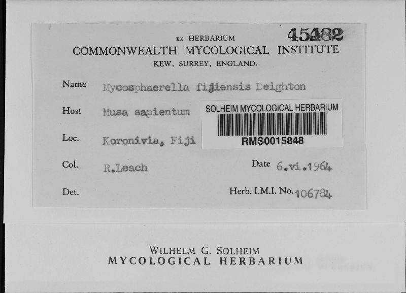 Mycosphaerella fijiensis image