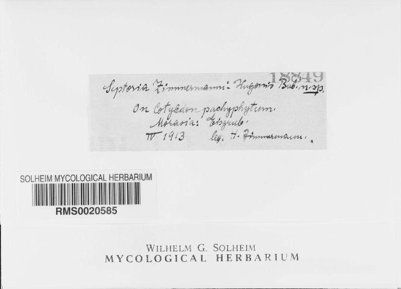 Septoria zimmermanni-hugonis image