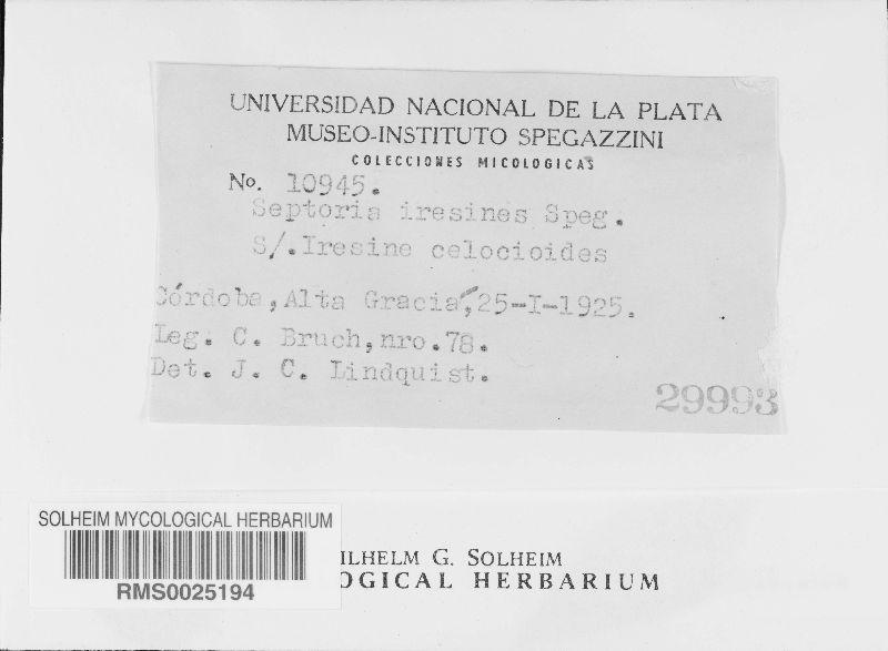 Septoria iresines image