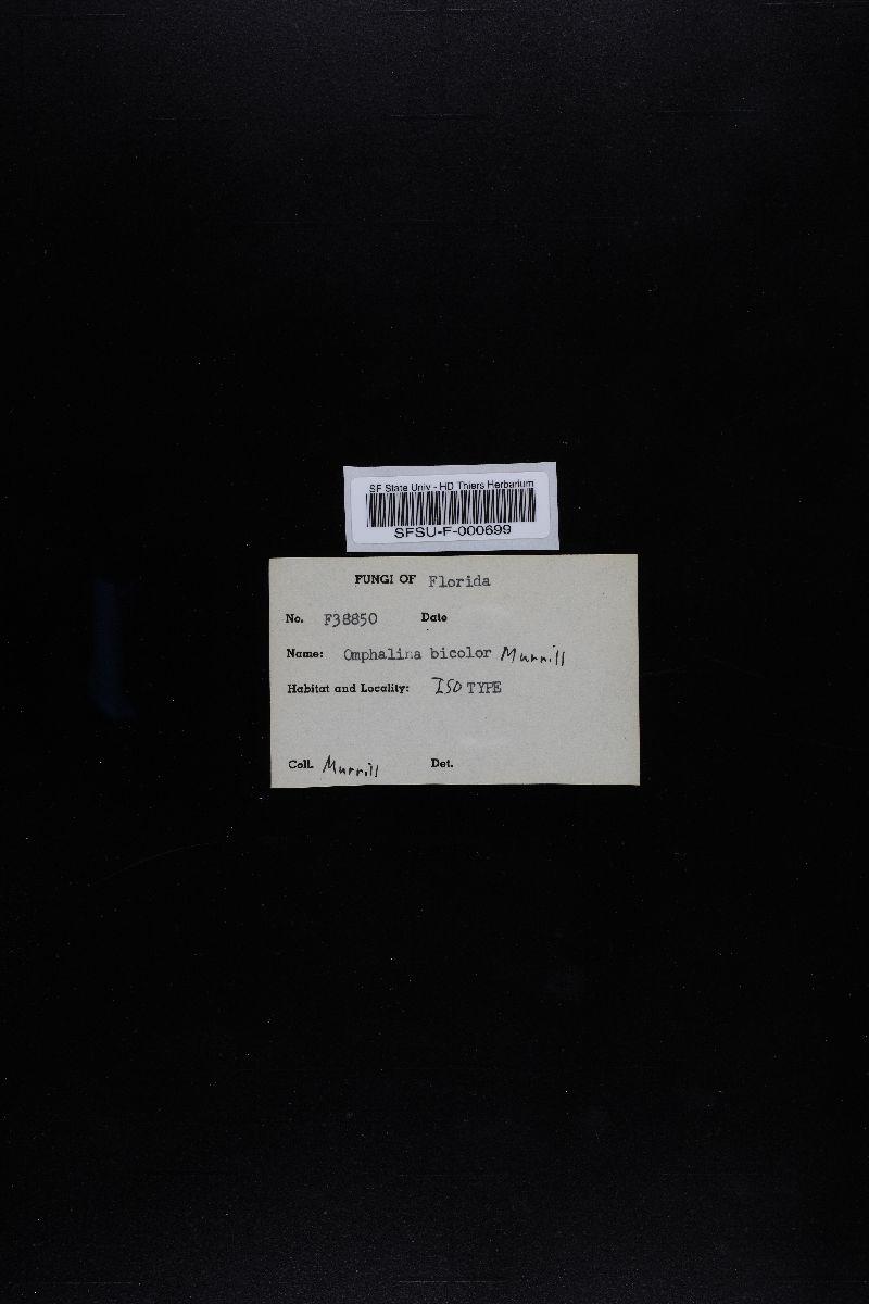 Omphalina bicolor image