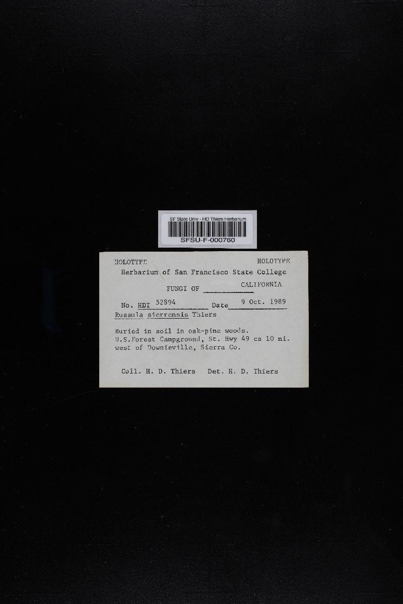 Russula sierrensis image