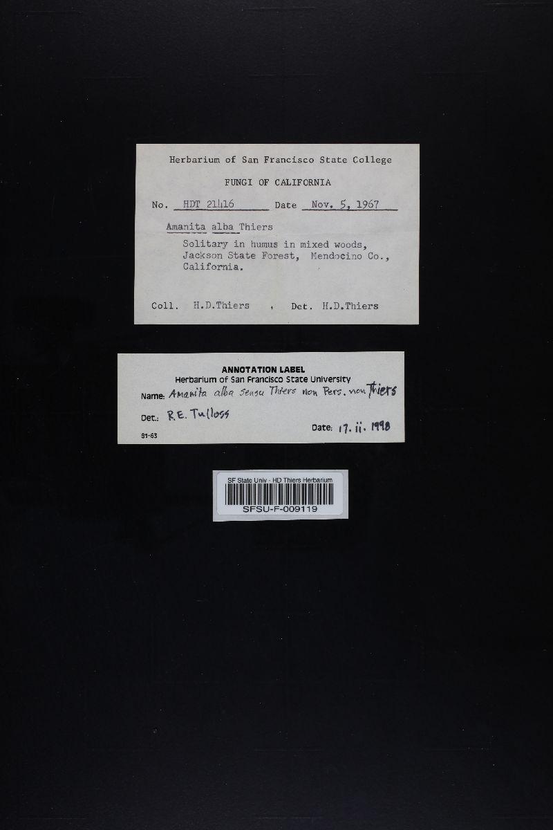 Amanita alba image