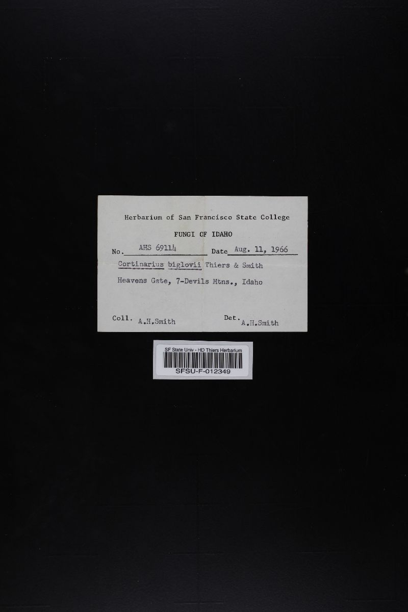 Cortinarius bigelowii image