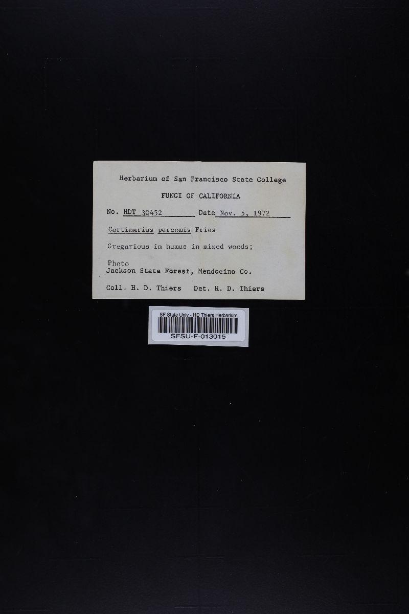 Cortinarius percomis image