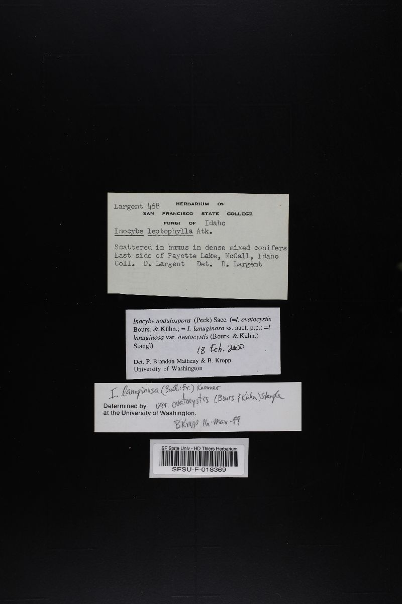 Inocybe nodulospora image