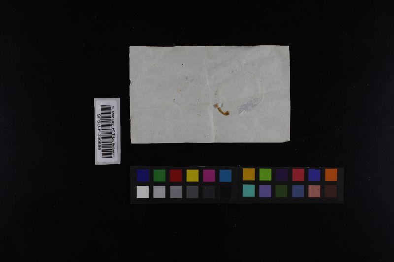 Russula burgeae image