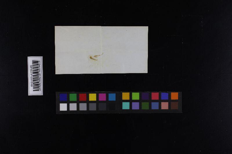 Russula gilva image