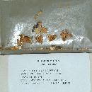 Crepidotus kauffmanii image