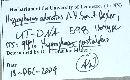 Hygrophorus odoratus image
