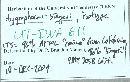 Hygrophorus singeri image