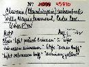 Image of Clavaria subaustralis