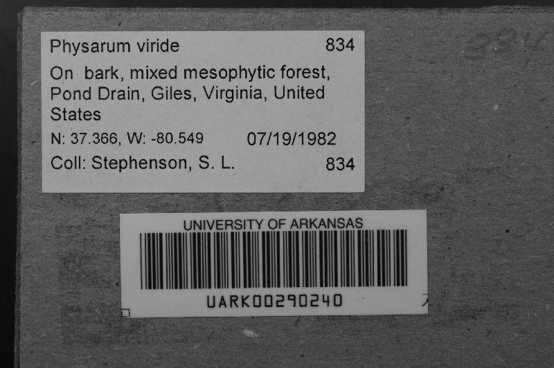 Physarum viride image
