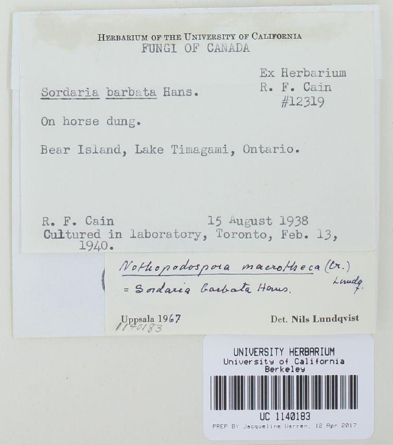 Arnium macrotheca image