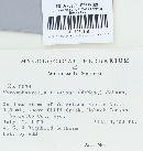 Mycosphaerella tassiana image