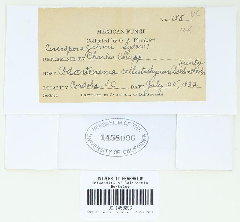 Pseudocercospora jahnii image