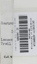 Gastroboletus amyloideus image