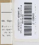 Gyrodon lividus image