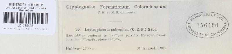 Leptosphaeriaceae image