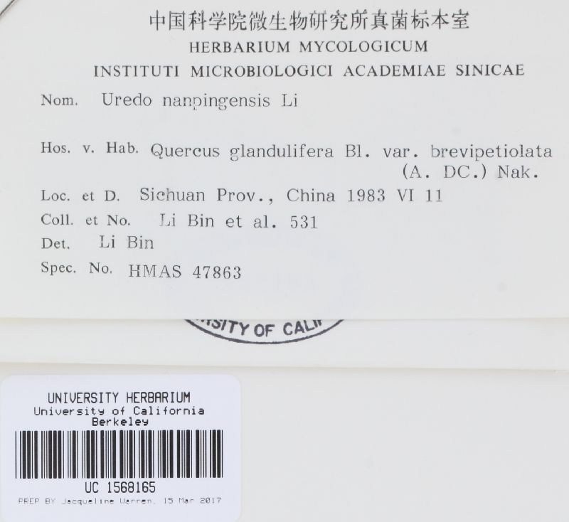 Uredo nanpingensis image