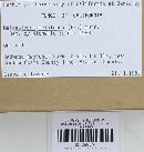 Melanoleuca melaleuca image