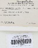 Ganoderma orbiforme image