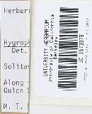 Hygrocybe punicea image