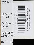 Ramaria leptoformosa image