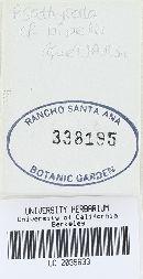 Psathyrella bipellis image
