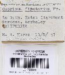 Coprinopsis radiata image