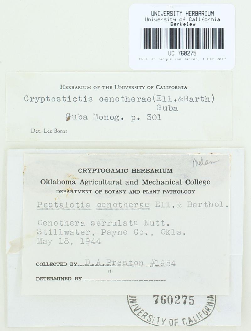 Cryptostictis oenotherae image