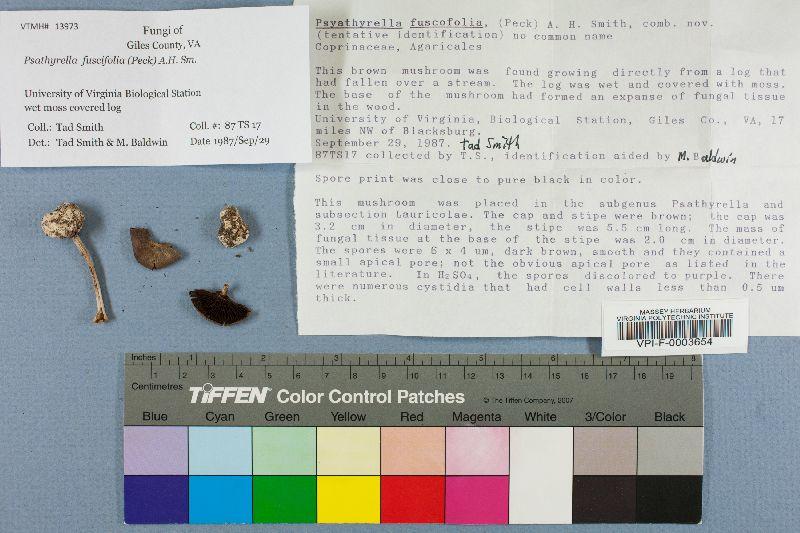 Psathyrella fuscifolia image
