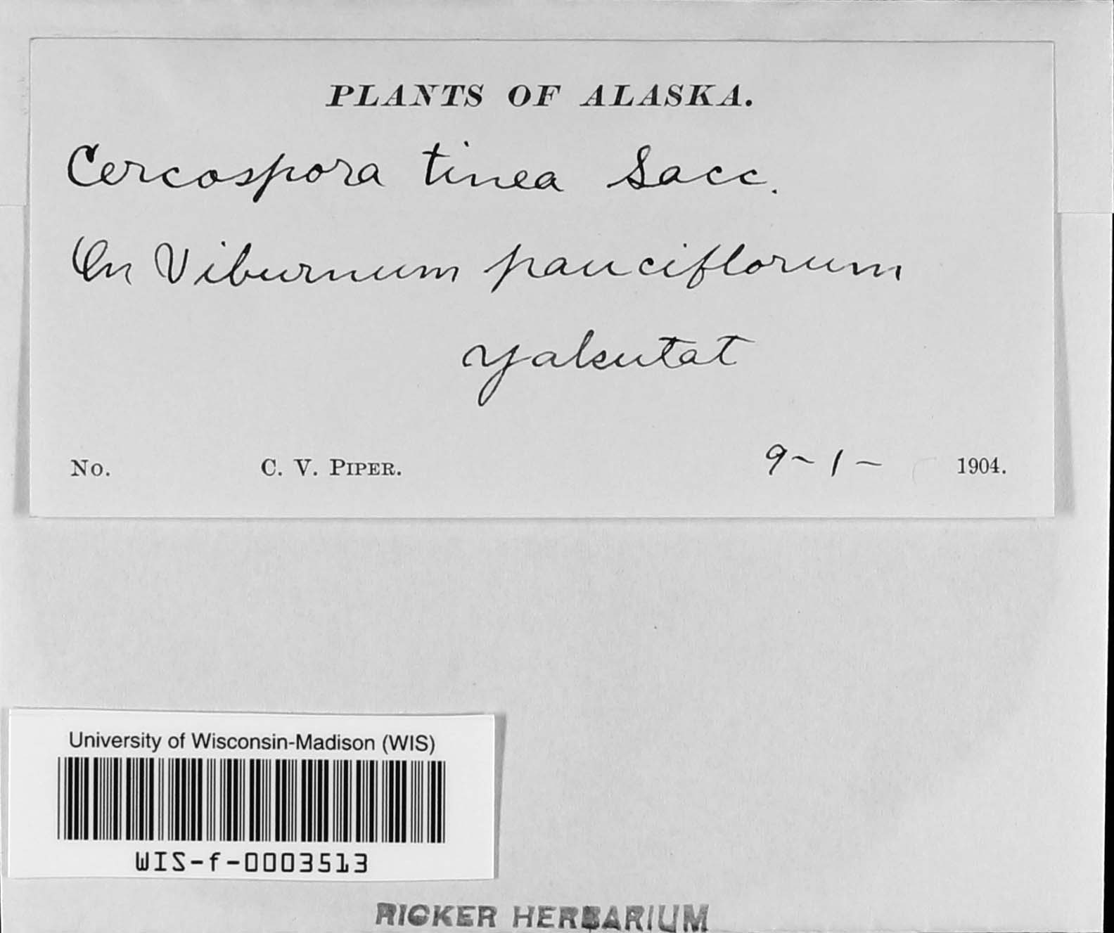 Pseudocercospora viburnigena image