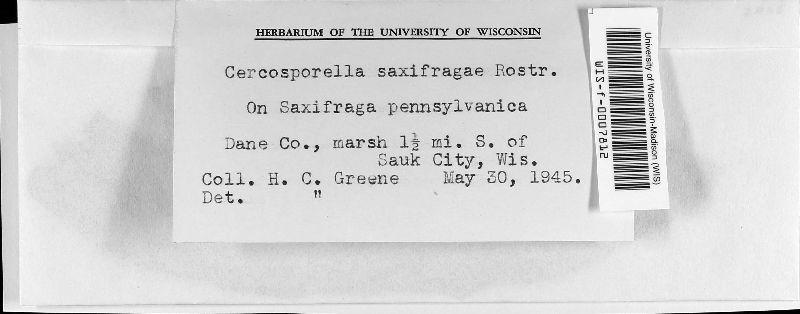 Cercosporella saxifragae image