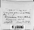 Cercospora ithacensis image