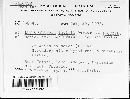 Leptosphaeria faullii image
