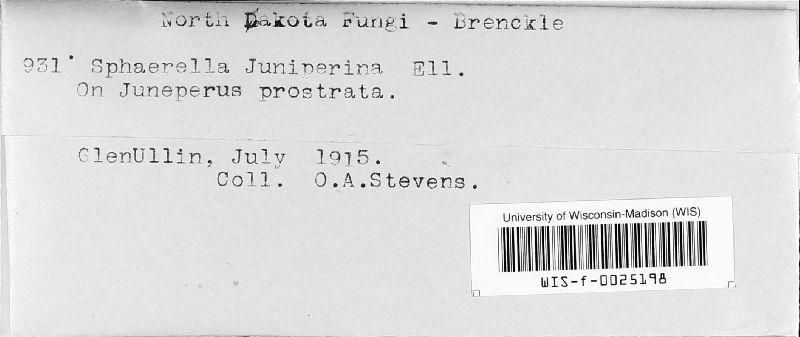 Mycosphaerella juniperina image
